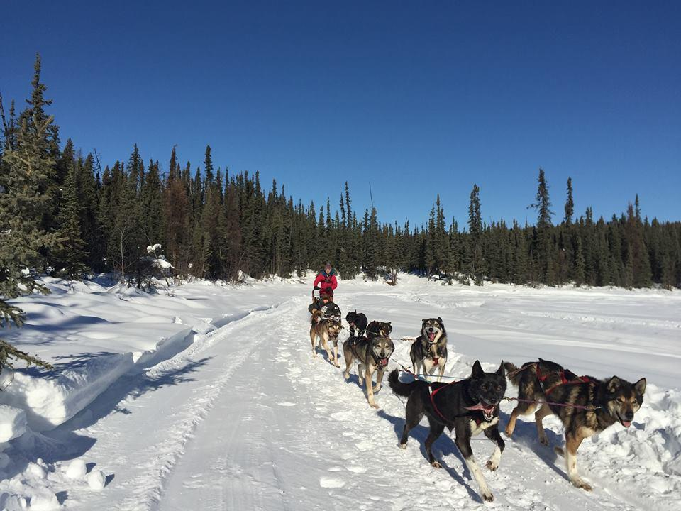 費爾班克斯 狗拉雪橇體驗之旅