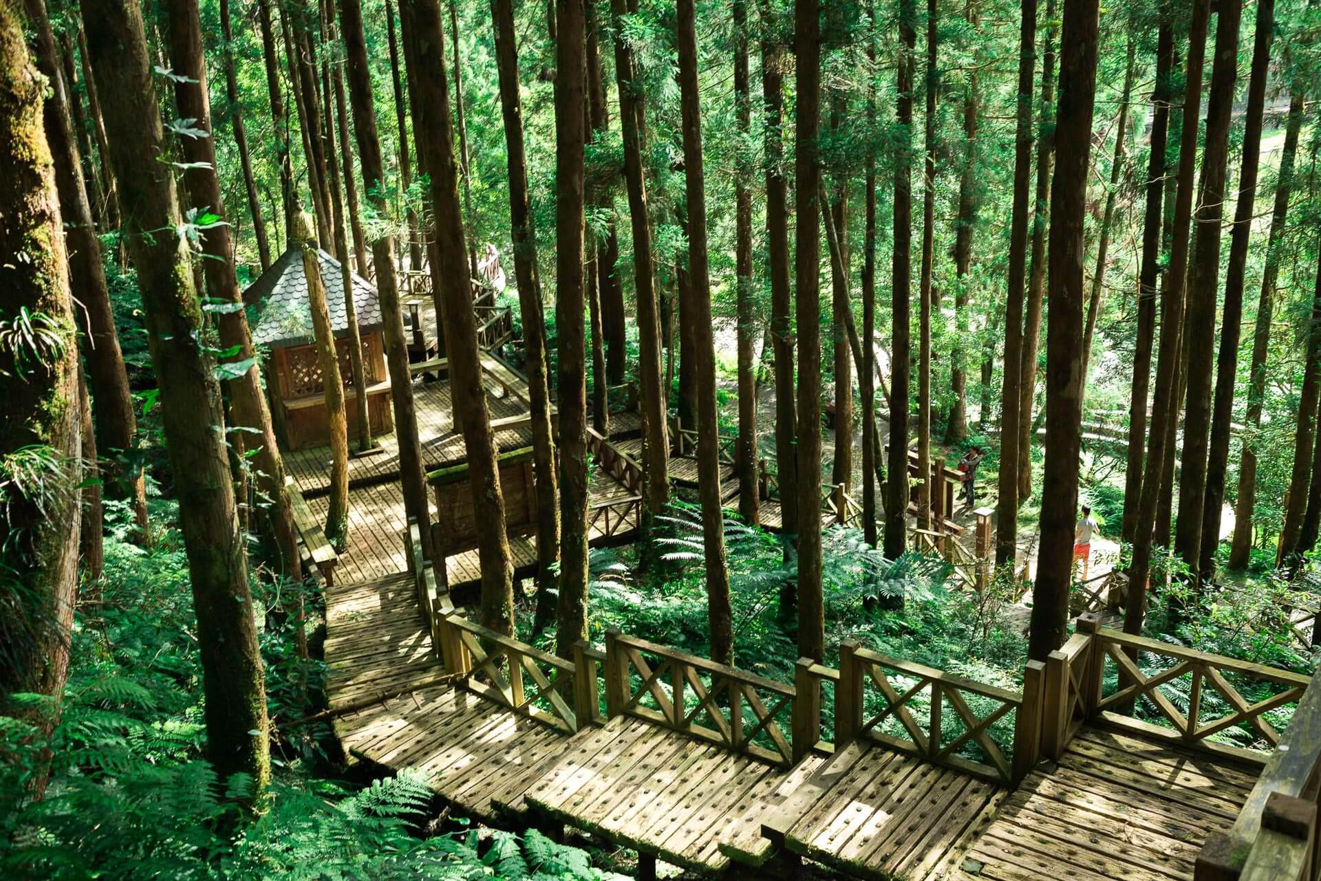 明池森林九寮溪生態一日