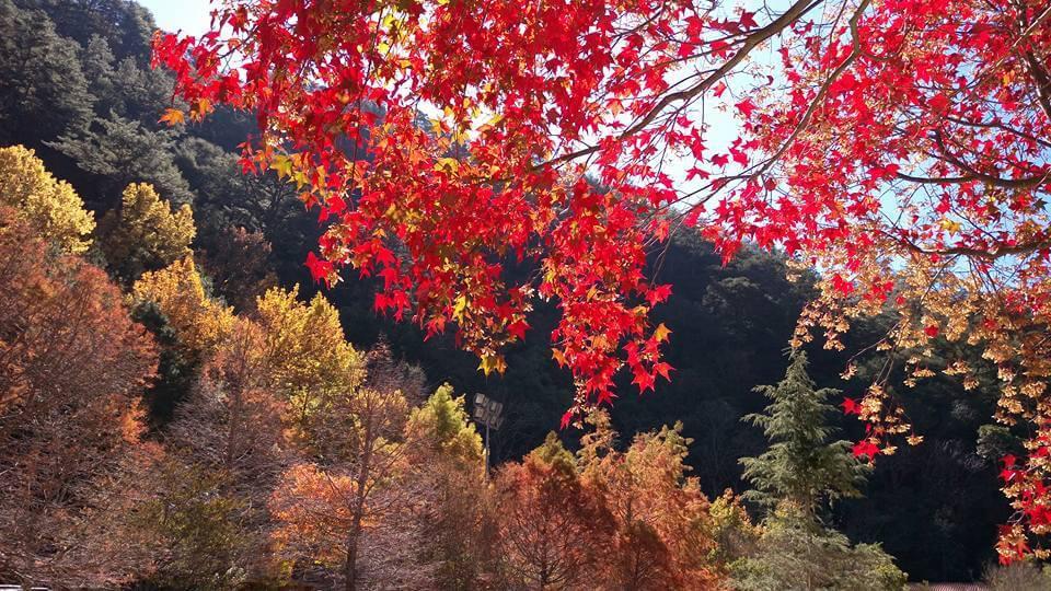 【輕鬆露營趣】武陵桃山野趣二日遊